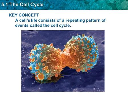 Cell Cycle Events include: