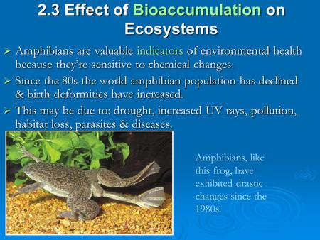 2.3 Effect of Bioaccumulation on Ecosystems  Amphibians are valuable indicators of environmental health because they're sensitive to chemical changes.