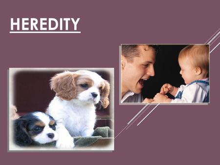 Heredity.