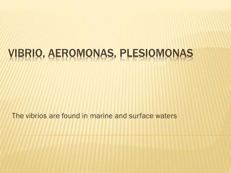 The vibrios are found in marine and surface waters.
