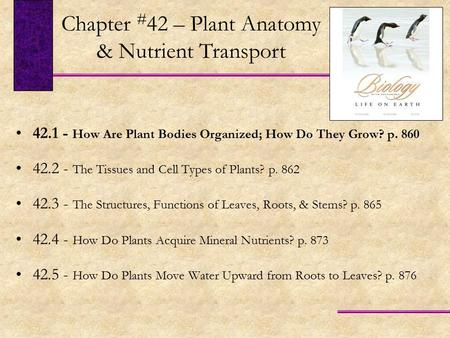 Chapter #42 – Plant Anatomy & Nutrient Transport