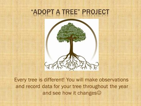 """Adopt A Tree"" Project Every tree is different! You will make observations and record data for your tree throughout the year and see how it changes"