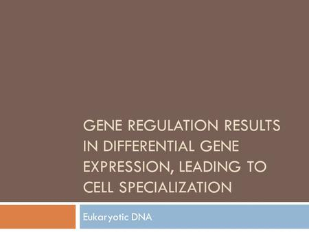 Gene Regulation results in differential Gene Expression, leading to cell Specialization Eukaryotic DNA.