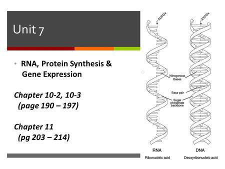 Unit 7 RNA, Protein Synthesis & Gene Expression Chapter 10-2, 10-3