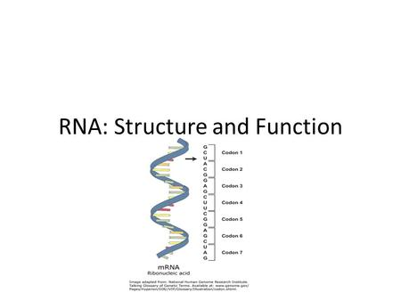 RNA: Structure and Function. RNA FUNCTION Function: RNA reads blueprints (DNA) & makes protein.