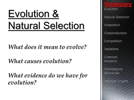 Evolution & Natural Selection What does it mean to evolve? What causes evolution? What evidence do we have for evolution?VocabularyEvolution Natural Selection.