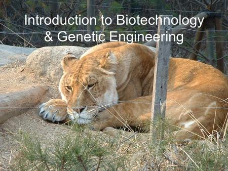 Introduction to Biotechnology & Genetic Engineering
