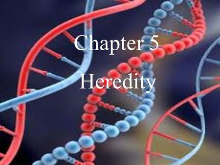 Chapter 5 Heredity.