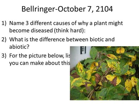 Bellringer-October 7, 2104 1)Name 3 different causes of why a plant might become diseased (think hard): 2)What is the difference between biotic and abiotic?