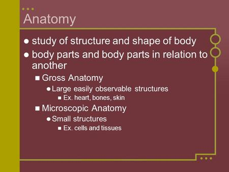 Anatomy study of structure and shape of body