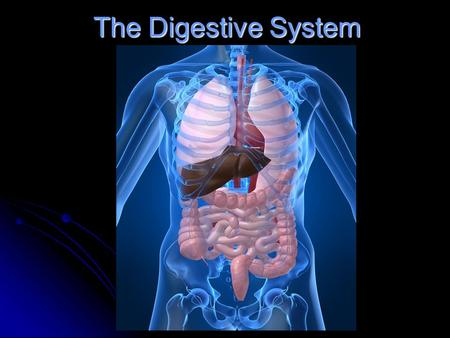 Livescience Digestive System Diagram Block And Schematic Diagrams