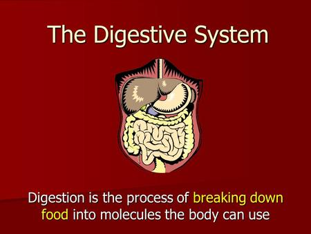 The Digestive System Digestion is the process of breaking down food into molecules the body can use.