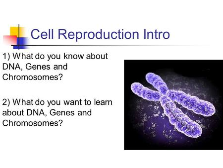 Cell Reproduction Intro 1) What do you know about DNA, <strong>Genes</strong> <strong>and</strong> <strong>Chromosomes</strong>? 2) What do you want to learn about DNA, <strong>Genes</strong> <strong>and</strong> <strong>Chromosomes</strong>?