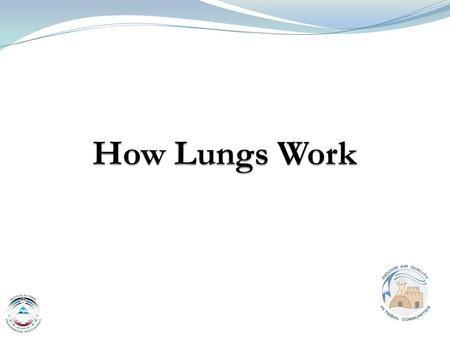 1 Mansel Nelson, ITEP. 2 Outline Normal anatomy and function of lungs Natural defenses of airways Common pollutants can injure lungs Common lung diseases.