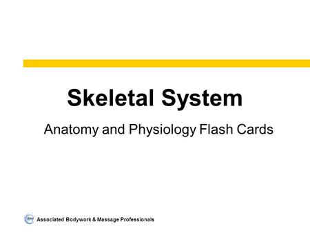 Associated Bodywork & Massage Professionals Skeletal System Anatomy and Physiology Flash Cards.