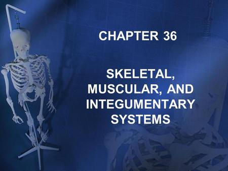 Ch. 33 Notes: Skeletal, Muscular, and Integumentary Systems. - ppt ...