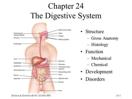 Tortora & Grabowski 9/e  2000 JWS 24-1 Chapter 24 The Digestive System Structure –Gross <strong>Anatomy</strong> –Histology Function –Mechanical –Chemical Development.