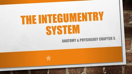 THE INTEGUMENTRY SYSTEM ANATOMY & PHYSIOLOGY CHAPTER 5.
