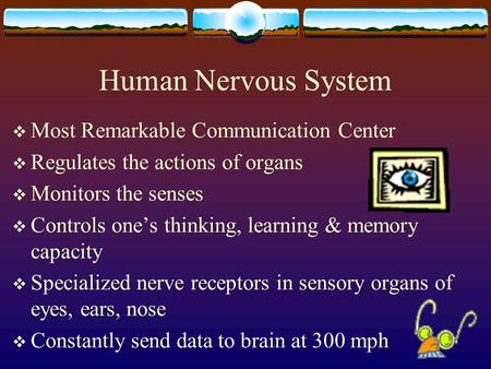 Human Nervous System Most Remarkable Communication Center