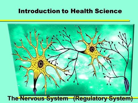 Introduction to Health Science The Nervous System (Regulatory System)