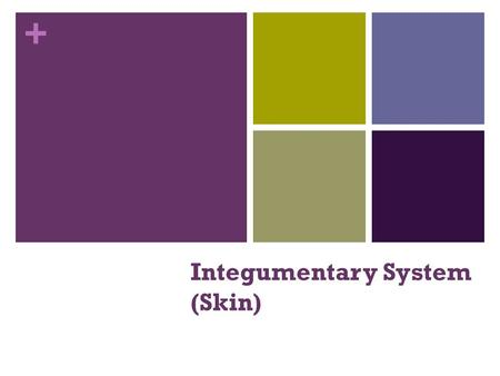 + Integumentary System (Skin). + Skin Functions Protects deeper tissues from: Mechanical damage (bumps) Chemical damage (acids and bases) Bacterial damage.