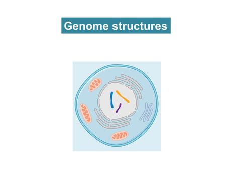 Genome structures. Table 7.2 Genomes 3 (© Garland Science 2007)