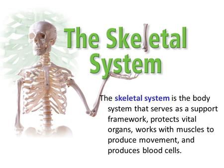 The skeletal system is the body system that serves as a support framework, protects vital organs, works with muscles to produce movement, and produces.