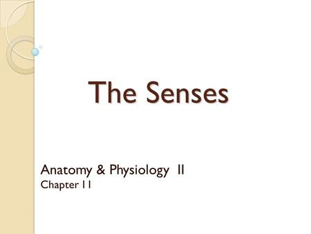 Anatomy & Physiology II Chapter 11