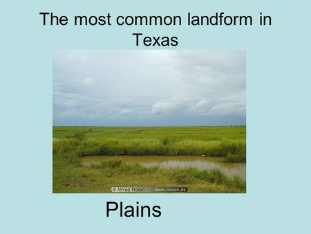 The most common landform in Texas