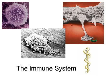 The Immune System. What is the Immune System? A group of defenses that protects the body against disease-causing organisms. Pathogen- Any disease.