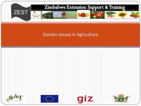 ZEST Gender issues in Agriculture. ZEST This is the state of being male or female (typically used with reference to social and cultural differences rather.