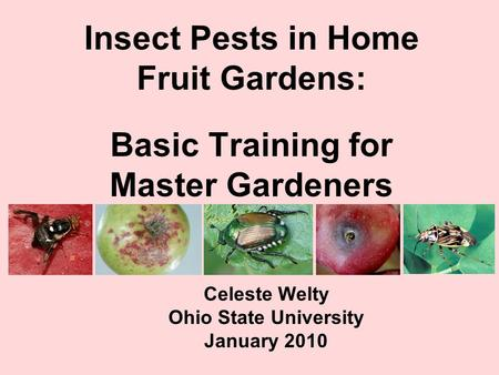 Insect Pests in <strong>Home</strong> Fruit Gardens: Basic Training for Master Gardeners Celeste Welty Ohio State University January 2010.