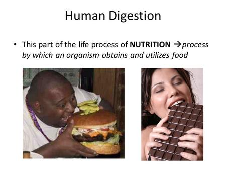 Human Digestion This part of the life process of NUTRITION  process by which an organism obtains and utilizes food.