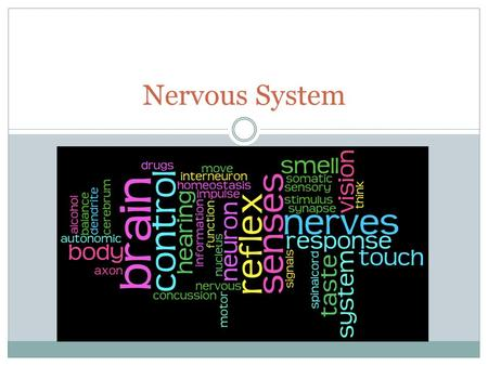 Nervous System. Essential Questions How do the structures of the nervous system relate to its functions? How are other body systems interrelated to the.