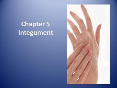 Chapter 5 Integument. Hair Follicle Review Nails Scale-like modifications of epidermis that forms clear protective covering on dorsal surface of distal.