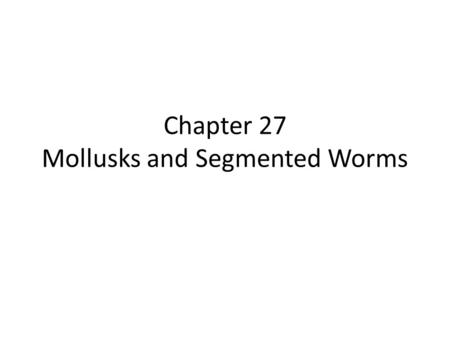 Chapter 27 Mollusks and Segmented Worms
