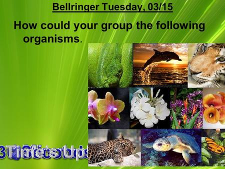 1 Bellringer Tuesday, 03/15 How could your group the following organisms.