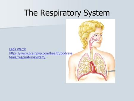 The Respiratory System Let's Watch https://www.brainpop.com/health/bodysys tems/respiratorysystem/