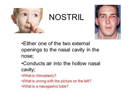 NOSTRIL Either one of the two external openings to the nasal cavity in the nose; Conducts air into the hollow nasal cavity; What is rhinoplasty? What is.