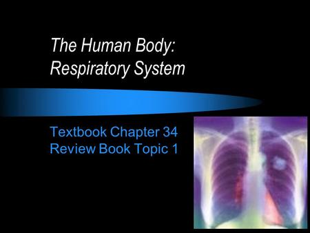 The Human Body: Respiratory System