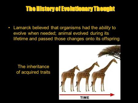 The History of Evolutionary Thought Lamarck believed that organisms had the ability to evolve when needed; animal evolved during its lifetime and passed.