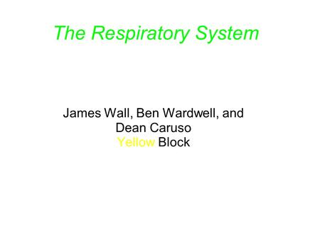 The Respiratory System James Wall, Ben Wardwell, and Dean Caruso Yellow Block.
