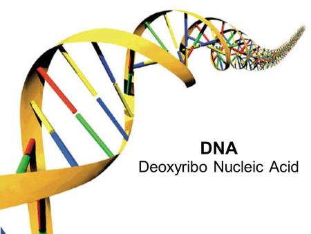 DNA Deoxyribo Nucleic Acid. DNA or Proteins? Scientists debated which was the genetic material A couple of experiments showed that altering DNA changed.