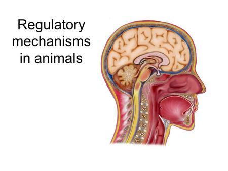 Regulatory mechanisms in animals. Regulatory pathways Homeostasis is maintenance of a relatively stable internal environment within an organism This is.