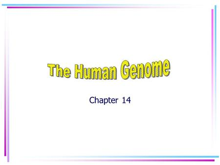 Chapter 14 Human Chromosomes Karyotype: a picture of the chromosomes from a single cell. Used to determine the sex, or possible genetic disorders of.