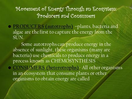 Movement of Energy Through an Ecosystem: Producers and Consumers PRODUCERS (autotrophs) –plants, bacteria and algae are the first to capture the energy.