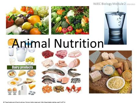 Animal Nutrition WJEC Biology Module 2 (2010-2012) © Teachable and Carol Lekkas. Some rights reserved.