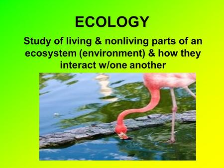 ECOLOGY Study of living & nonliving parts of an ecosystem (environment) & how they interact w/one another.
