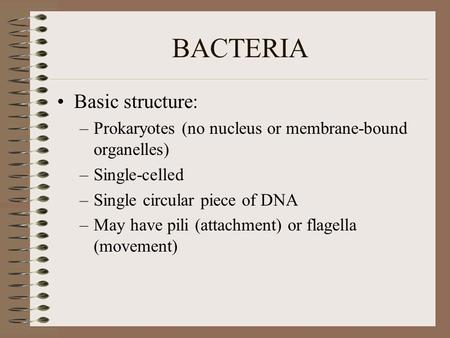BACTERIA Basic structure: –Prokaryotes (no nucleus or membrane-bound organelles) –Single-celled –Single circular piece of DNA –May have pili (attachment)