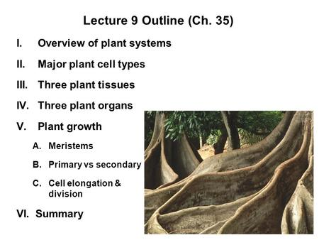 Lecture 9 Outline (Ch. 35) Overview of plant systems